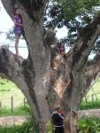 Kids climbing their favorite tree